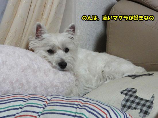 DSC03869_20130516213510.jpg