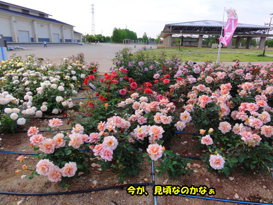 DSC03912.jpg