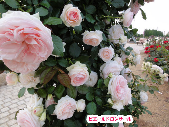 DSC04019.jpg