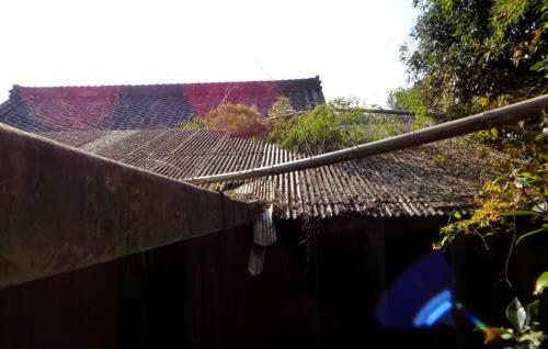 2013_12 05_屋根に倒れた孟宗竹(証拠写真)