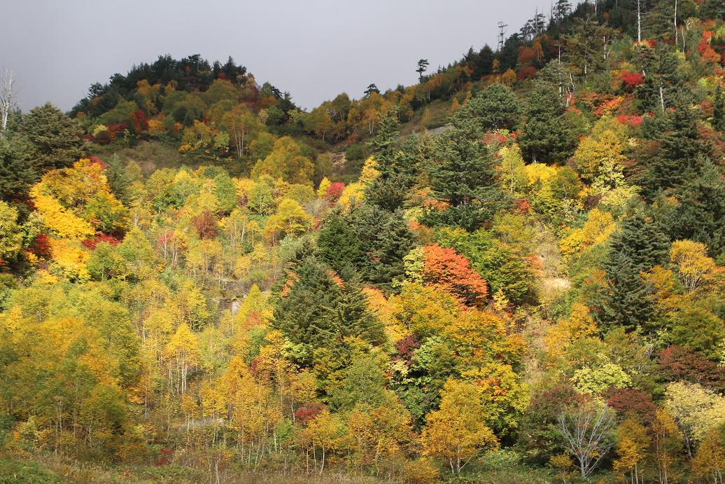 スキー場跡周辺08(2013.10.10)