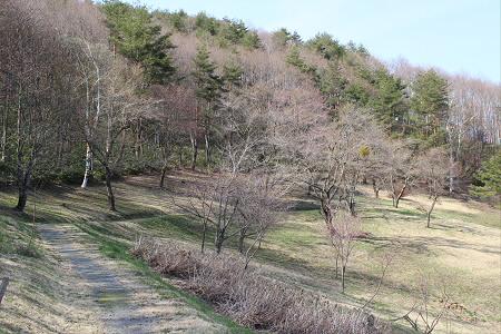 桜松公園05(2013.5.10)