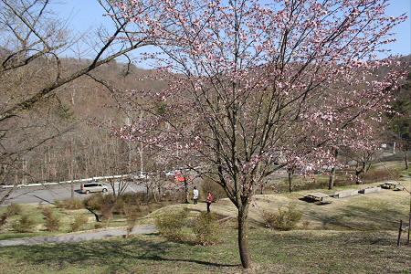 桜松公園02(2013.5.10)
