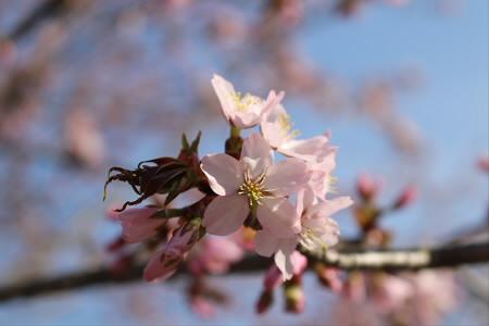 桜松公園03(2013.5.10)