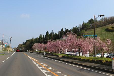 道の駅にしねの桜01(2013.5.14)
