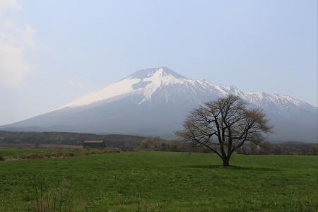 上坊牧野の一本桜01(20130514)