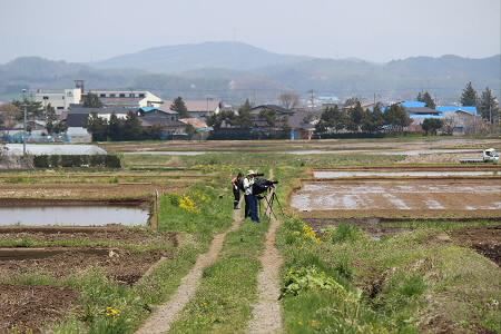 為内の一本桜12(2013.5.14)