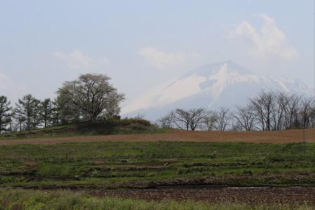 為内の一本桜10(2013.5.14)