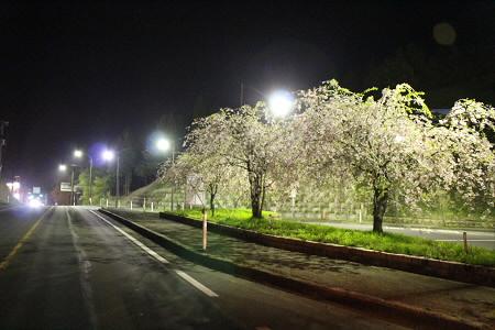 道の駅にしねの桜07(2013.5.14)