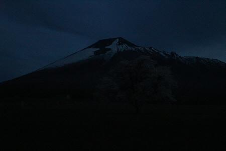 上坊牧野の一本桜10(2013.5.18)