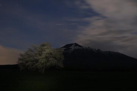 上坊牧野の一本桜12(2013.5.18)