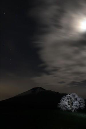 上坊牧野の一本桜15(2013.5.18)