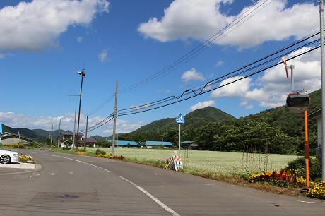 そば畑細野01(2013.8.28)