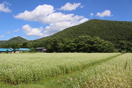 そば畑細野03(2013.8.28)