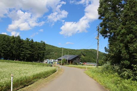 そば畑細野04(2013.8.28)