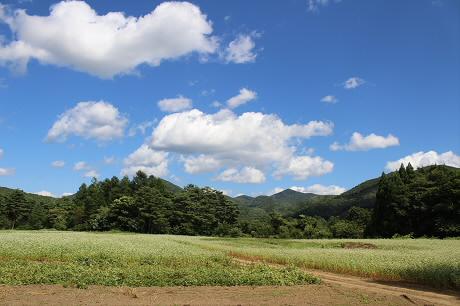 そば畑細野05(2013.8.28)