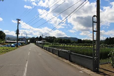 そば畑細野14(2013.8.28)