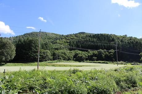 そば畑星沢02(2013.8.28)