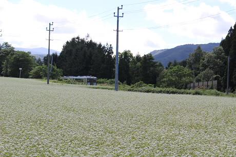 そば畑星沢08(2013.8.28)