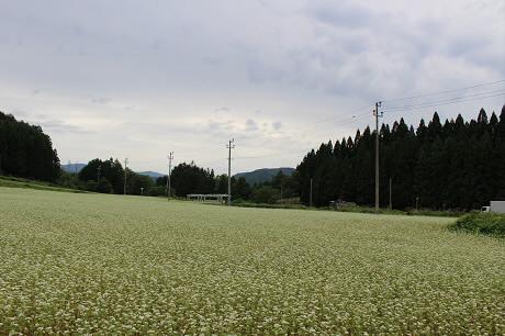 そば畑星沢01(2013.8.29)