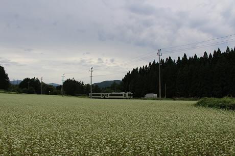 そば畑星沢02(2013.8.29)