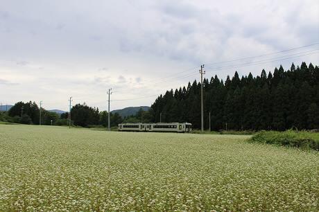 そば畑星沢03(2013.8.29)