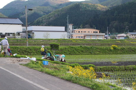 夕方田んぼのある風景10(2013.5.23)