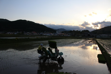 夕方田んぼのある風景12(2013.5.23)
