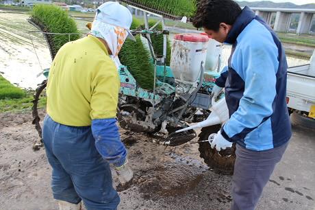 夕方田んぼのある風景14(2013.5.23)