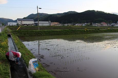 夕方田んぼのある風景15(2013.5.23)