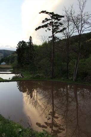 夕方田んぼのある風景22(2013.5.23)