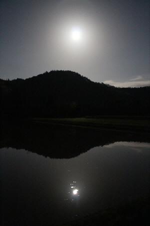 夜の水田01(2013.5.24)