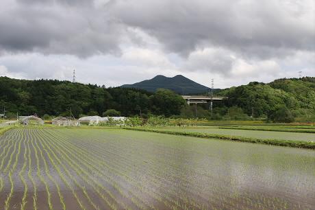 夕方の水田02(2013.5.30)