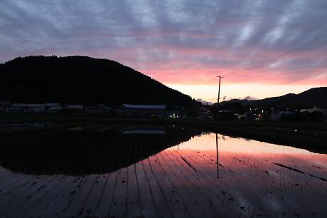 夕方の水田09(2013.5.30)