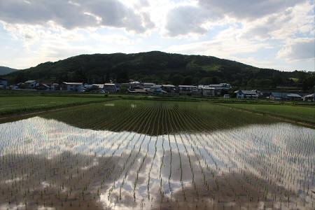 水田の水鏡02(2013.5.31)