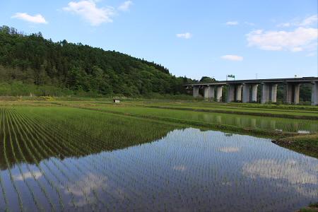 水田の水鏡04(2013.5.31)
