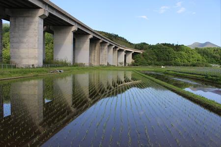 水田の水鏡07(2013.5.31)
