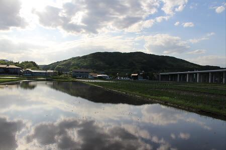 水田の水鏡12(2013.5.31)
