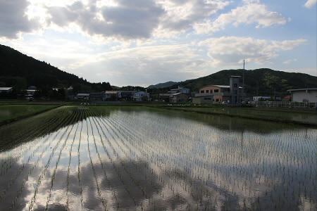 水田の水鏡13(2013.5.31)
