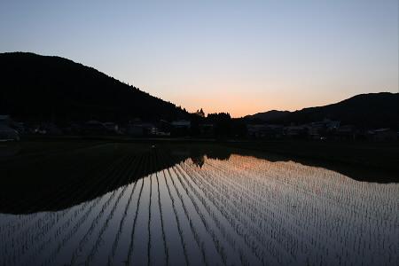 水田の水鏡14(2013.5.31)