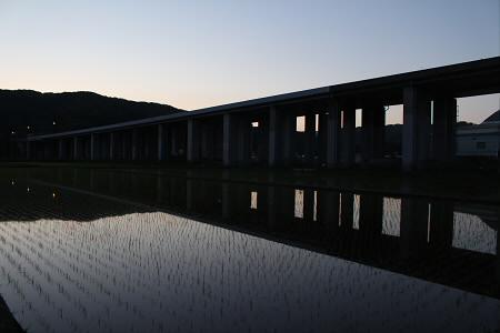 水田の水鏡15(2013.5.31)