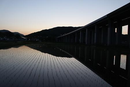 水田の水鏡16(2013.5.31)