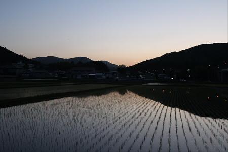 水田の水鏡17(2013.5.31)