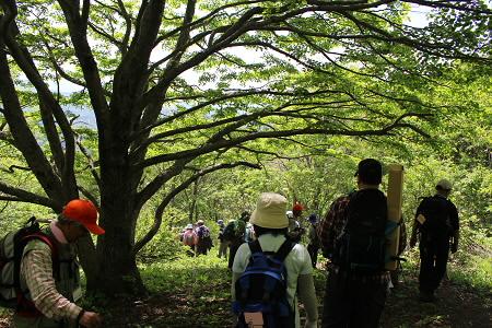 七時雨山開き93(2013.6.2)