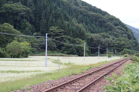 そば畑星沢02(2013.9.6)