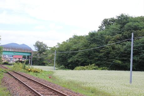 そば畑星沢03(2013.9.6)