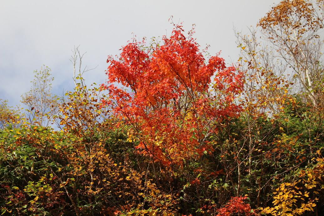 紅葉のアスピーテライン48(2013.10.10)