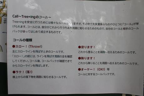 ロッジタンデムでツリーイング15(2013.7.15)