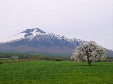 上坊牧野の一本桜02(2013.5.19)