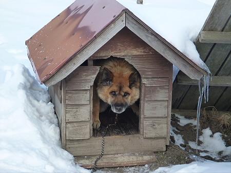犬小屋スリー01(2013.1.16)